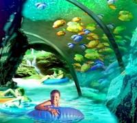 SeaWorld's Auqatica Florida Resident Discount. AboutOrlando.com