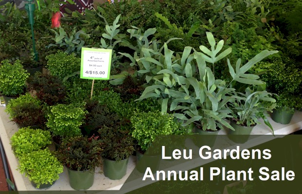 Lush landscape of Leu Gardens offers a quiet reprieve from the busy Orlando area attractions .