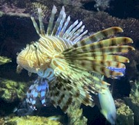 Orlando Theme Park Discounts including the SeaWorld.  Exotic Lion Fish.  MORE: AboutOrlando.com