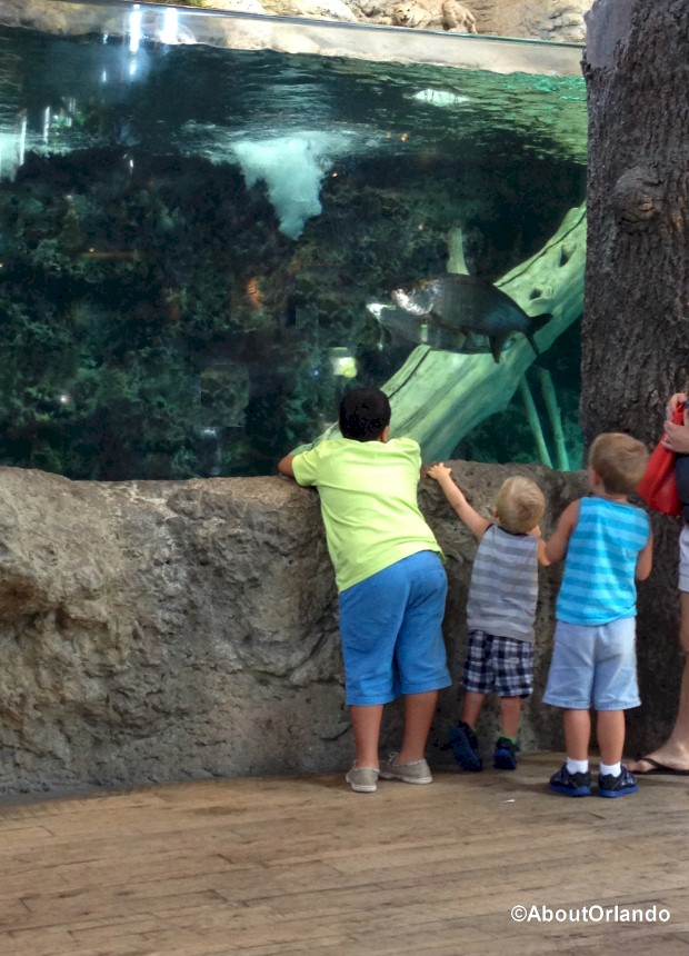 Kids enjoying as the fish swim by at Bass Pro Shops Orlando