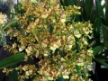 The Greater Orlando Orchid Society presents the Annual spring orchid sale and display.