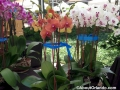 winter-garden-farmers-market-orchids
