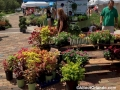 winter-garden-farmers-market-plants