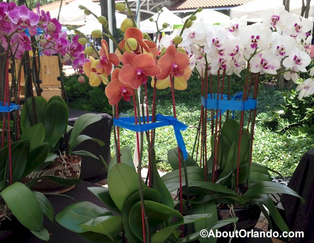 winter-garden-farmers-market-orchids