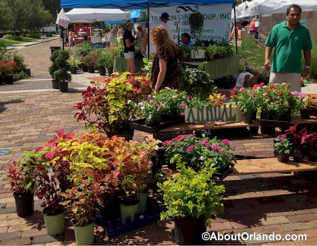 Winter Garden Farmers Market About Orlando – Plants for Winter Garden